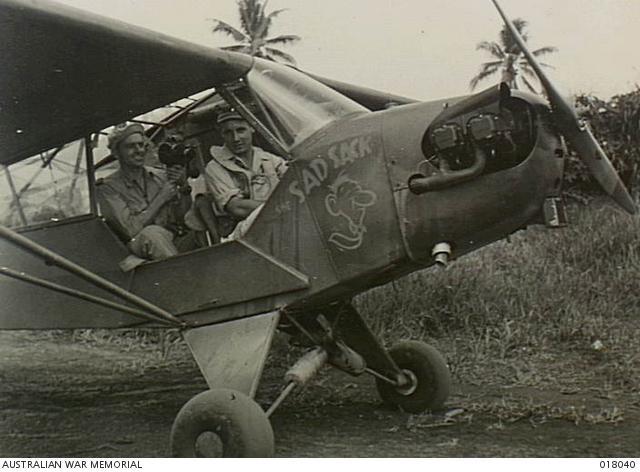 Piper australia